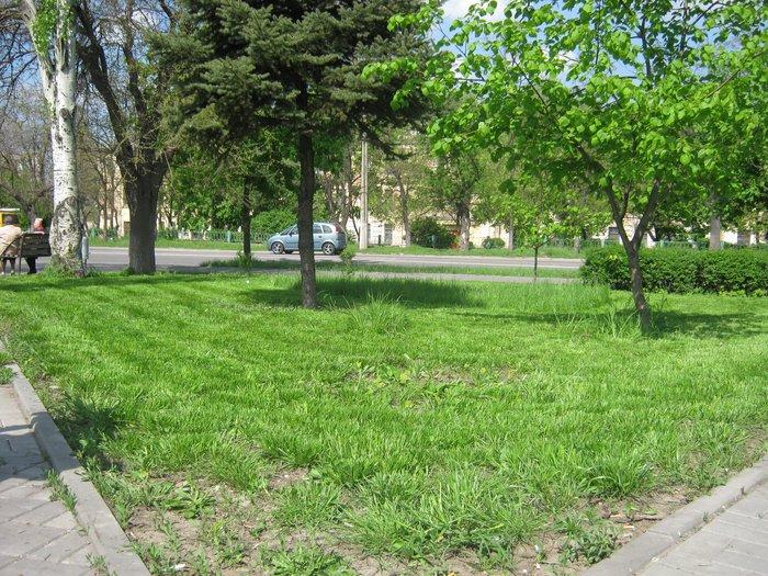 Мариуполь избавляют от лишней травы (ФОТО), фото-1