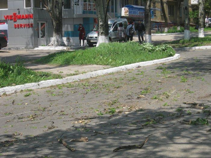 В Мариуполе без видимых причин упало большое дерево, перекрыв проезжую часть (ФОТО), фото-7