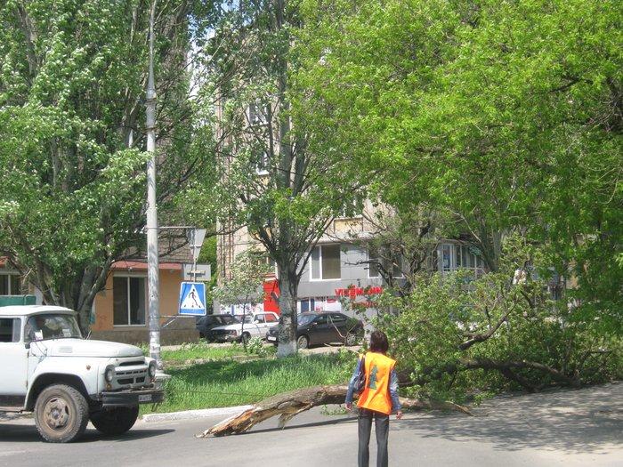 В Мариуполе без видимых причин упало большое дерево, перекрыв проезжую часть (ФОТО), фото-2