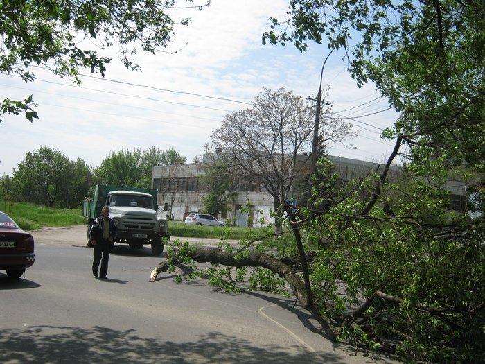 В Мариуполе без видимых причин упало большое дерево, перекрыв проезжую часть (ФОТО), фото-3