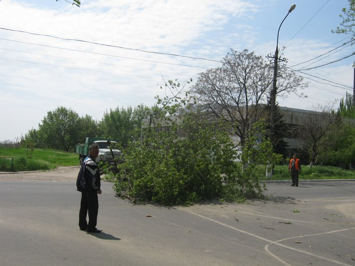 В Мариуполе без видимых причин упало большое дерево, перекрыв проезжую часть (ФОТО), фото-5