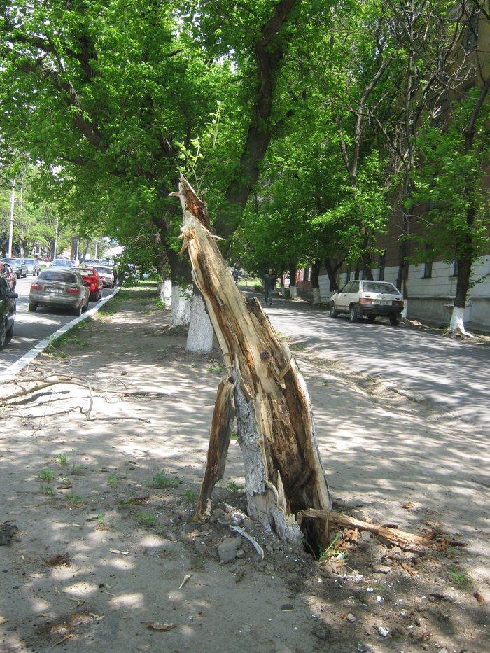В Мариуполе без видимых причин упало большое дерево, перекрыв проезжую часть (ФОТО), фото-6