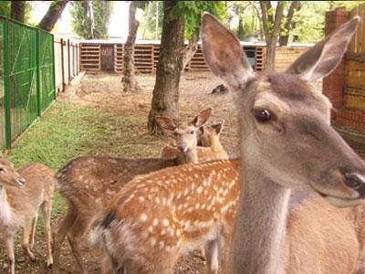 Сартанский зоопарк Вашуры переживает аншлаг  , фото-1