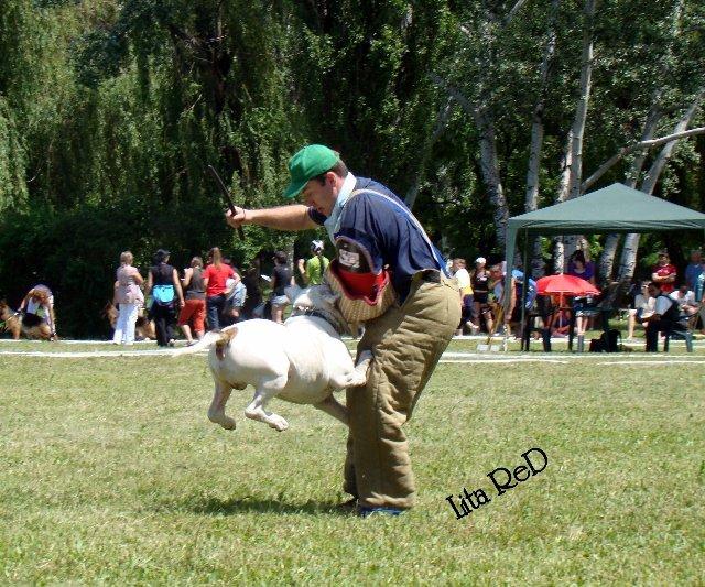 В Мариуполе прошла выставка собак (Фоторепортаж), фото-25