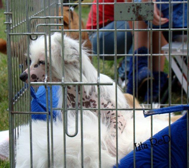 В Мариуполе прошла выставка собак (Фоторепортаж), фото-10