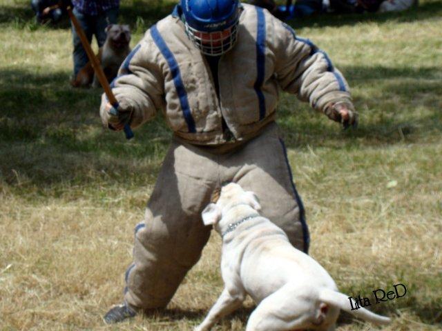 В Мариуполе прошла выставка собак (Фоторепортаж), фото-29