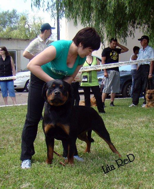 В Мариуполе прошла выставка собак (Фоторепортаж), фото-19