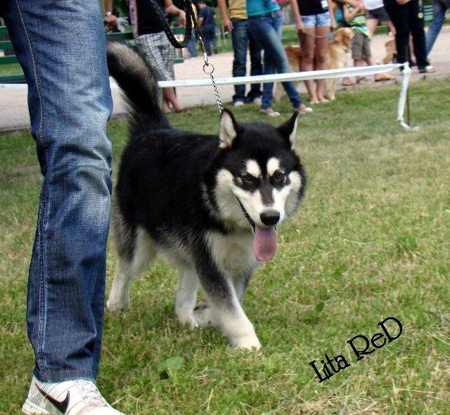 В Мариуполе прошла выставка собак (Фоторепортаж), фото-9