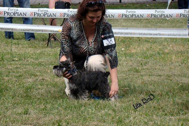 В Мариуполе прошла выставка собак (Фоторепортаж), фото-8