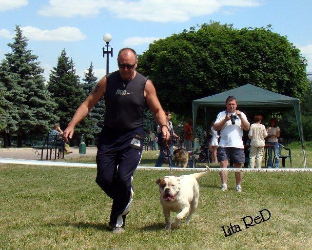 В Мариуполе прошла выставка собак (Фоторепортаж), фото-11