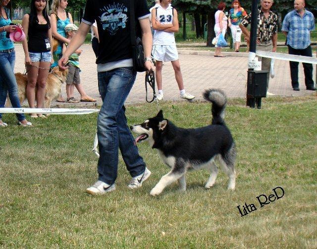 В Мариуполе прошла выставка собак (Фоторепортаж), фото-7
