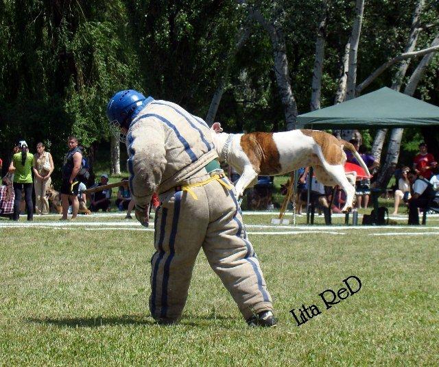В Мариуполе прошла выставка собак (Фоторепортаж), фото-26