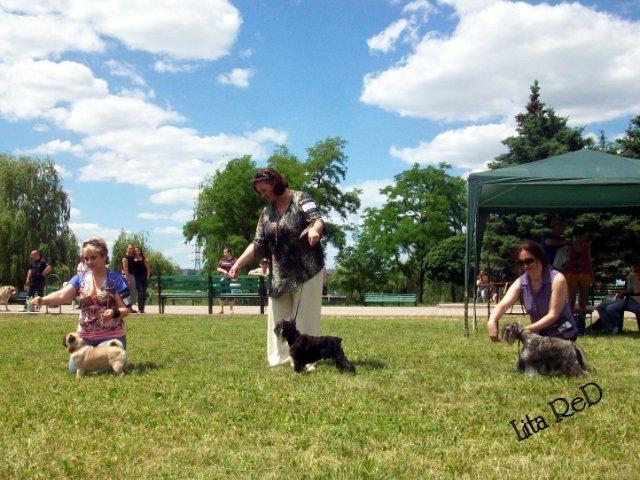 В Мариуполе прошла выставка собак (Фоторепортаж), фото-1
