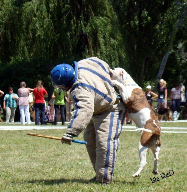 В Мариуполе прошла выставка собак (Фоторепортаж), фото-27