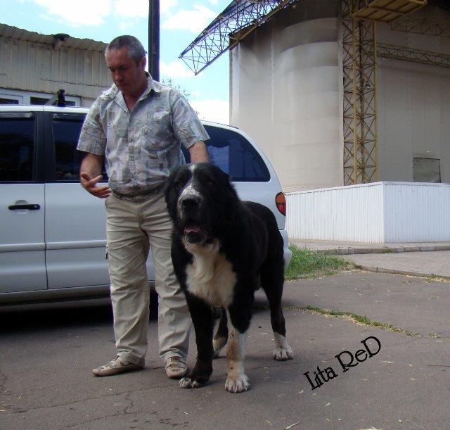 В Мариуполе прошла выставка собак (Фоторепортаж), фото-12