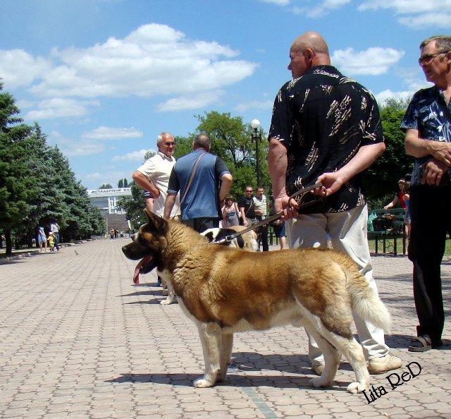 В Мариуполе прошла выставка собак (Фоторепортаж), фото-22