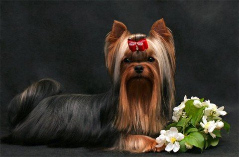 В Мариуполе на выставке собак будут искать наркотики, фото-1