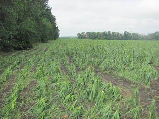 Крупный град побил посевы в Старобешевском районе (ФОТО), фото-3