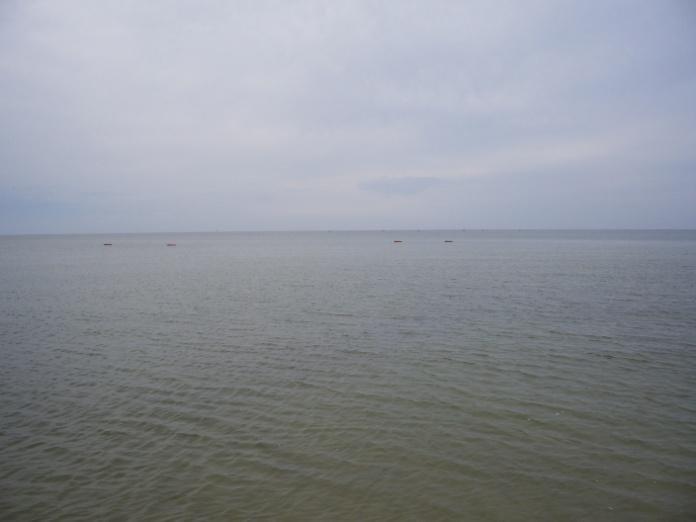 Исследователи нашли причину трагических смертей на мелководье в пос. Юрьевка (ФОТО), фото-3
