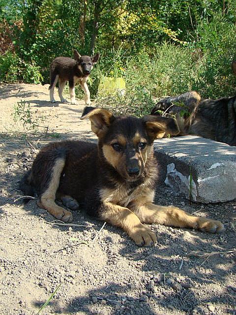Мариупольское общество защиты животных борется за спасение 16 щенков (ФОТО), фото-2