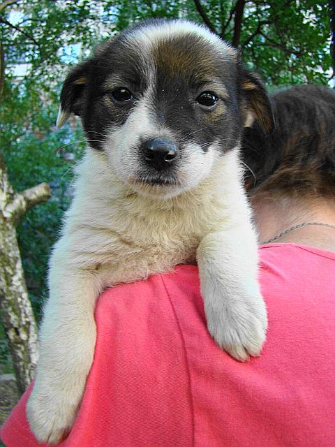 Мариупольское общество защиты животных борется за спасение 16 щенков (ФОТО), фото-3