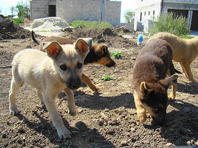 Мариупольское общество защиты животных борется за спасение 16 щенков (ФОТО), фото-1