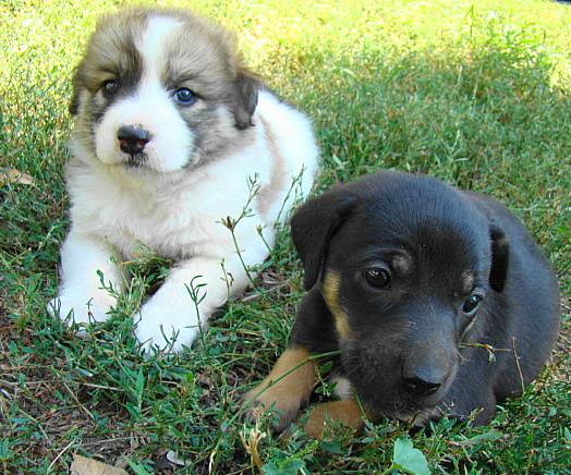 Мариупольское общество защиты животных борется за спасение 16 щенков (ФОТО), фото-4