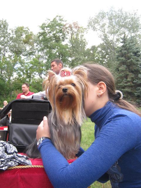 В Мариуполе лучшими племенными псами признаны доберман, цвергшнауцер и мопсы (ФОТОРЕПОРТАЖ), фото-4