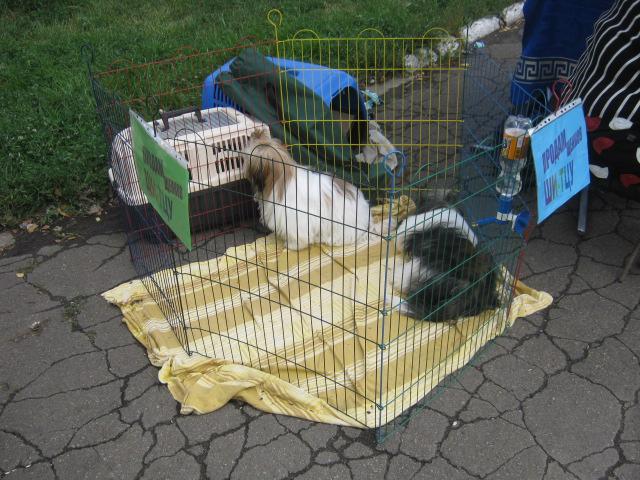 В Мариуполе лучшими племенными псами признаны доберман, цвергшнауцер и мопсы (ФОТОРЕПОРТАЖ), фото-10