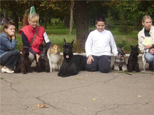 В Мариуполе лучшими племенными псами признаны доберман, цвергшнауцер и мопсы (ФОТОРЕПОРТАЖ), фото-29