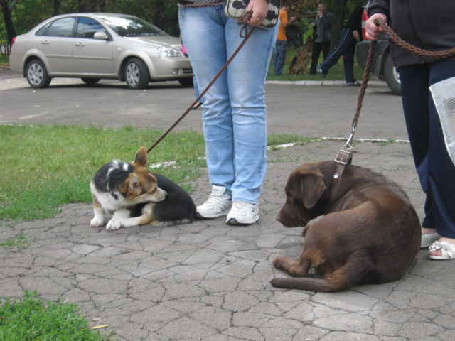 В Мариуполе лучшими племенными псами признаны доберман, цвергшнауцер и мопсы (ФОТОРЕПОРТАЖ), фото-28