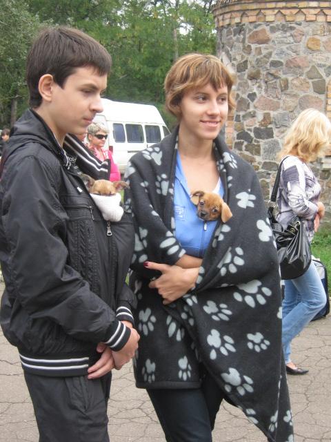 В Мариуполе лучшими племенными псами признаны доберман, цвергшнауцер и мопсы (ФОТОРЕПОРТАЖ), фото-11