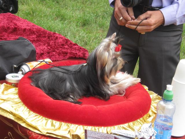 В Мариуполе лучшими племенными псами признаны доберман, цвергшнауцер и мопсы (ФОТОРЕПОРТАЖ), фото-1