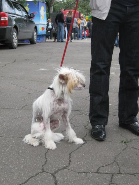 В Мариуполе лучшими племенными псами признаны доберман, цвергшнауцер и мопсы (ФОТОРЕПОРТАЖ), фото-21