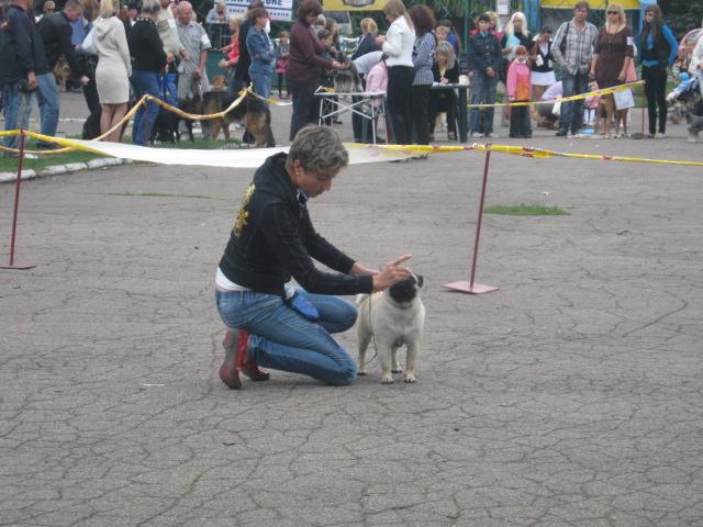 В Мариуполе лучшими племенными псами признаны доберман, цвергшнауцер и мопсы (ФОТОРЕПОРТАЖ), фото-14