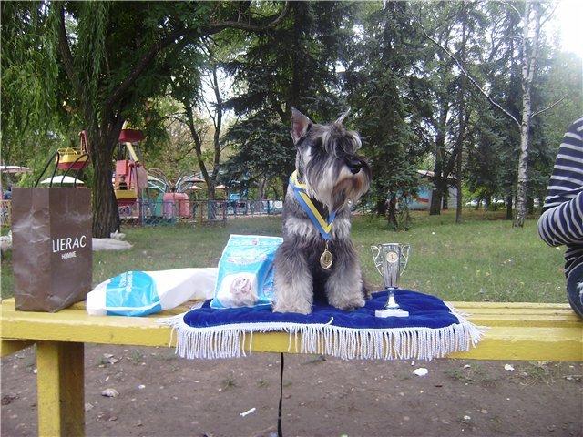 В Мариуполе лучшими племенными псами признаны доберман, цвергшнауцер и мопсы (ФОТОРЕПОРТАЖ), фото-17