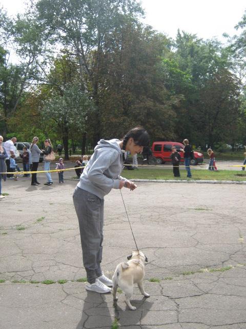 В Мариуполе лучшими племенными псами признаны доберман, цвергшнауцер и мопсы (ФОТОРЕПОРТАЖ), фото-12