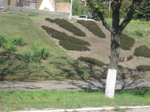 В Мариуполе создали клумбу - флаг (ФОТО), фото-1