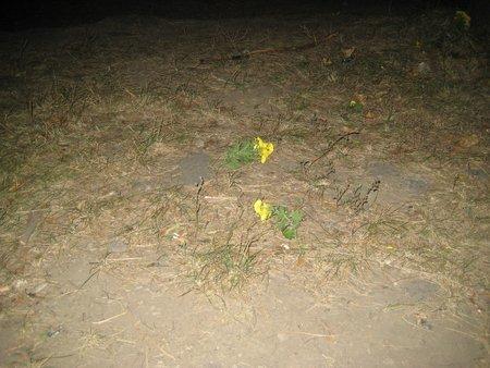 Пытались уничтожить цветы