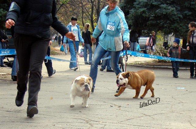 В Мариуполе лучшей собакой на Всеукраинской выставке стал йоркширский терьер из Донецка (ФОТО), фото-4