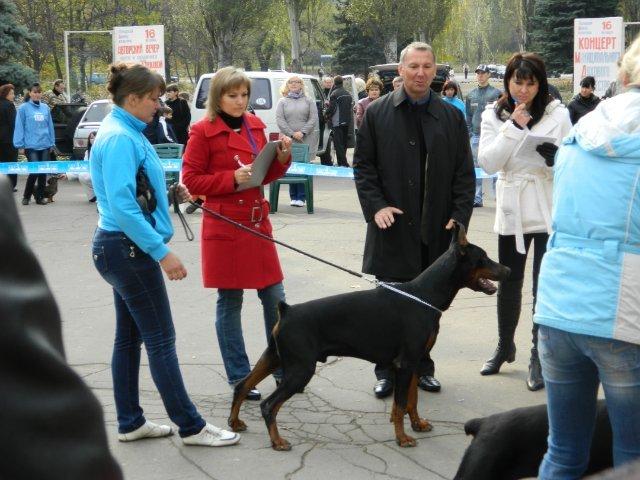 В Мариуполе лучшей собакой на Всеукраинской выставке стал йоркширский терьер из Донецка (ФОТО), фото-1