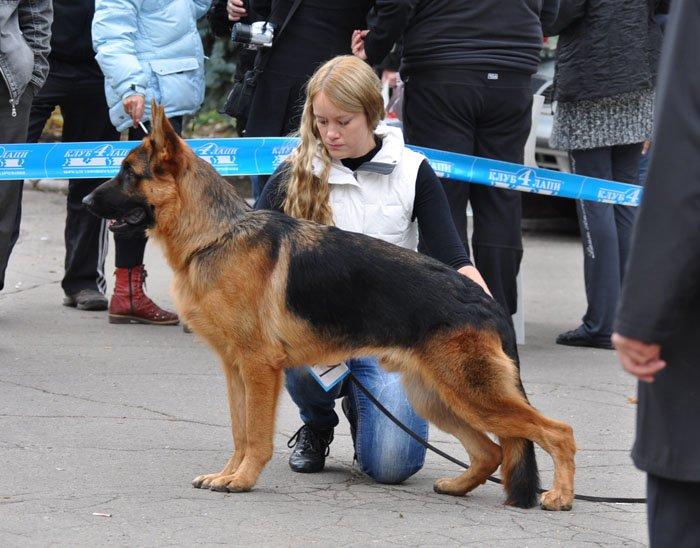 В Мариуполе лучшей собакой на Всеукраинской выставке стал йоркширский терьер из Донецка (ФОТО), фото-7
