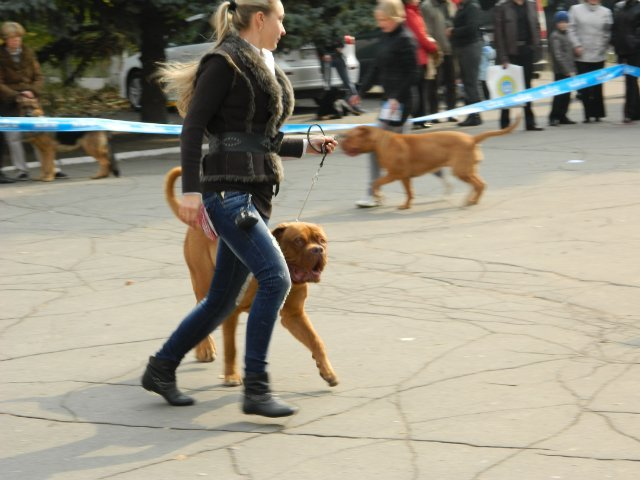 В Мариуполе лучшей собакой на Всеукраинской выставке стал йоркширский терьер из Донецка (ФОТО), фото-3