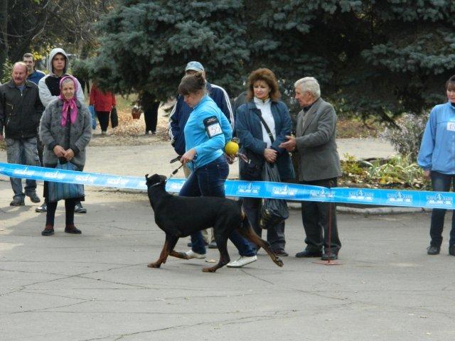 В Мариуполе лучшей собакой на Всеукраинской выставке стал йоркширский терьер из Донецка (ФОТО), фото-2