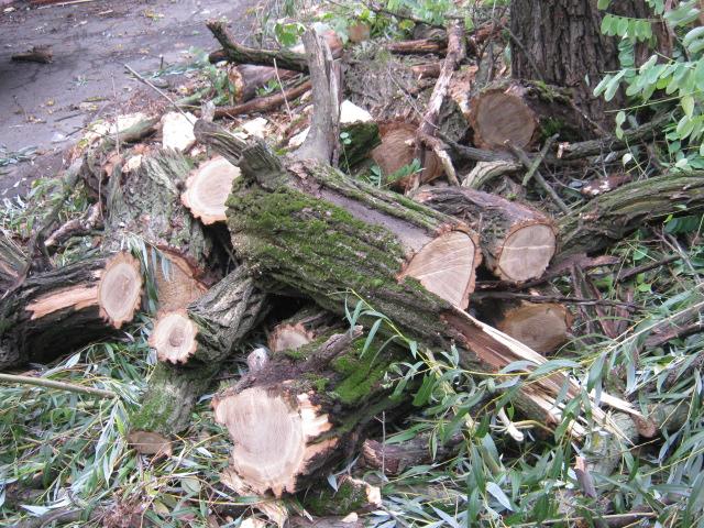 В Мариуполе спилили пять 15-метровых деревьев ради строительства магазина (ФОТО), фото-9
