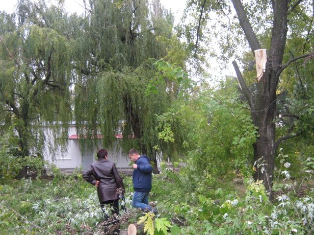 В Мариуполе спилили пять 15-метровых деревьев ради строительства магазина (ФОТО), фото-6