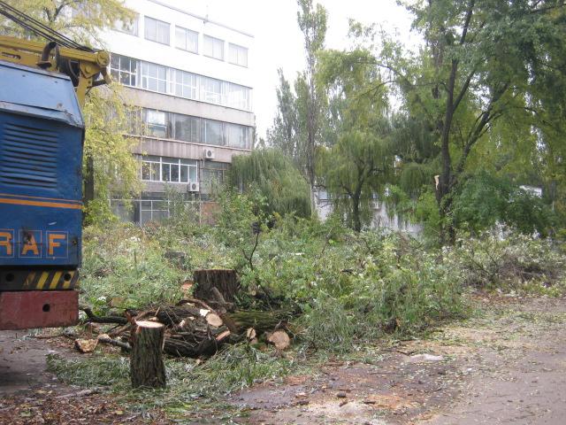 В Мариуполе спилили пять 15-метровых деревьев ради строительства магазина (ФОТО), фото-1