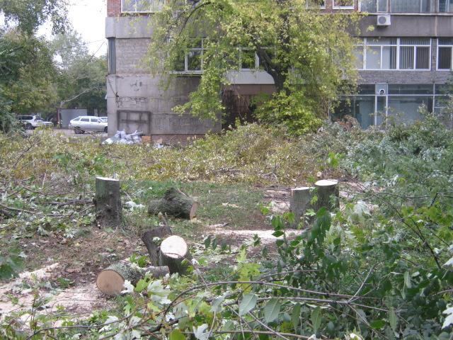 В Мариуполе спилили пять 15-метровых деревьев ради строительства магазина (ФОТО), фото-2