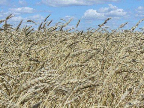 В Приазовье аграрии предлагают подкорректировать проект земельной реформы, фото-1