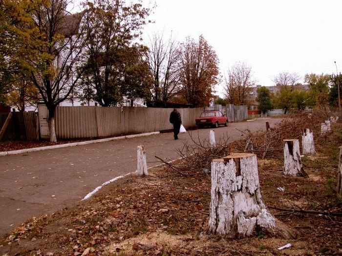 На территории храма возле горбольницы №2 вырубили деревья (ФОТО), фото-1